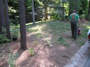 Garden 1 (2)