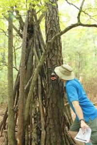 Wilkerson Nature Preserve (1)