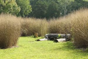 Wilkerson Nature Preserve (19)