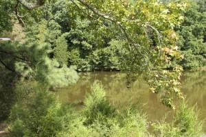 Wilkerson Nature Preserve (21)