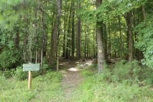 Wilkerson Nature Preserve (22)