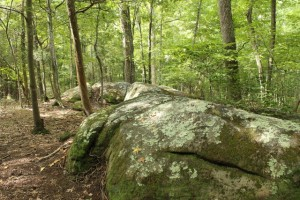 Wilkerson Nature Preserve (23)
