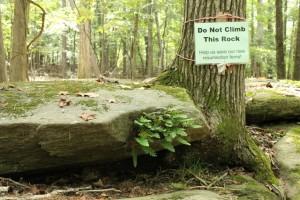 Wilkerson Nature Preserve (24)