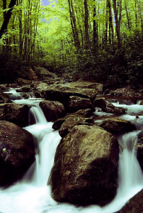Mountain Cascade © Jeffrey D. Nichols