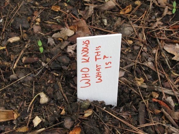 Senior Garden Labels (6)