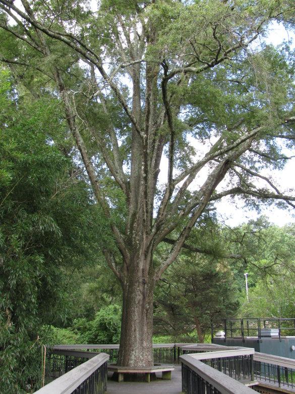 NicholsNotes Pullen Park (12)