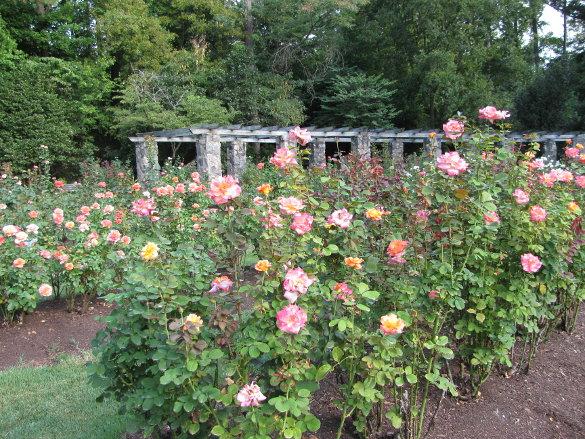 raleigh rose garden nicholsnotes
