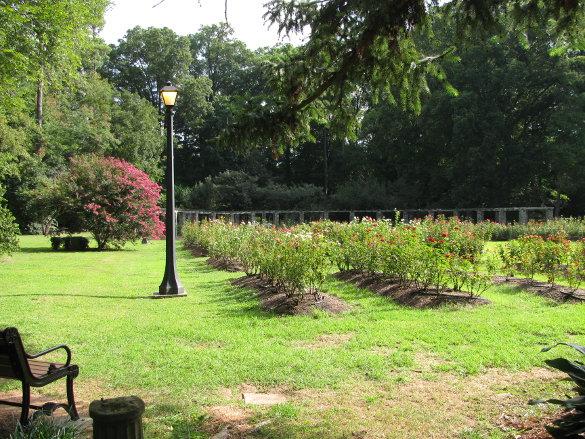 NicholsNotes Raleigh Rose Garden (8)