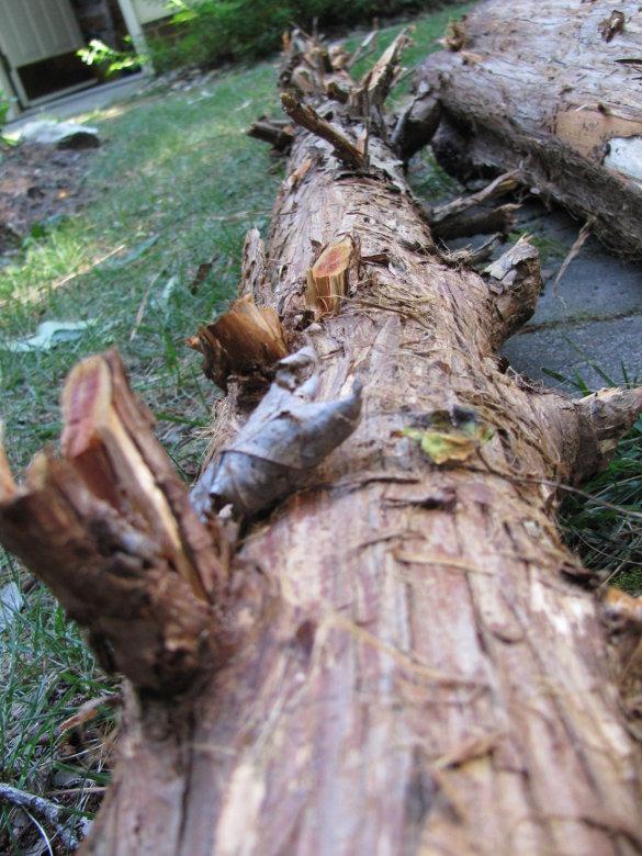 Cedar log