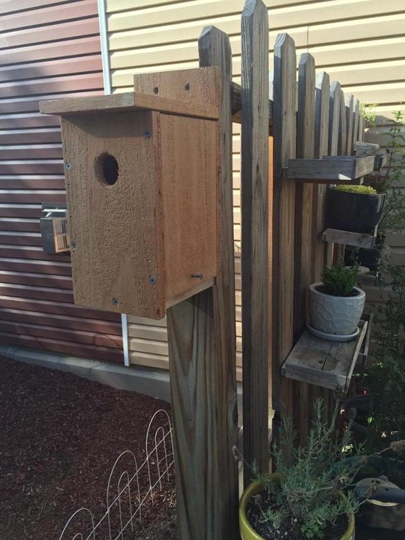 Bluebird Nest Box (30)