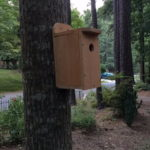 Bluebird Nest Box (31)
