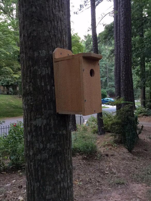 Bluebird Nest Box (31)