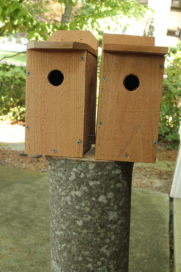 Bluebird Nest Box (51)