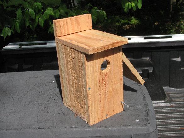 Bluebird Nest Box (52)