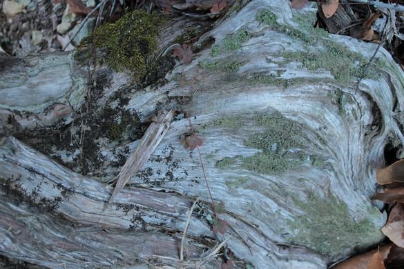 Eno River State Park (12)