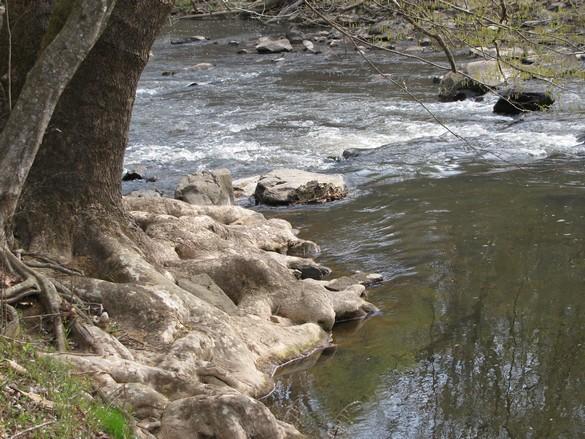 Eno River State Park (6)