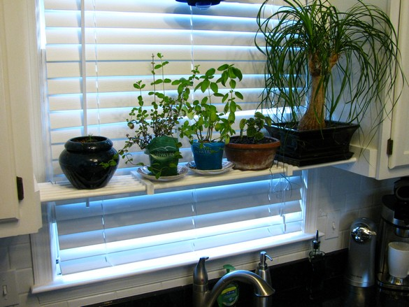 Kitchen Plant Shelf (29)