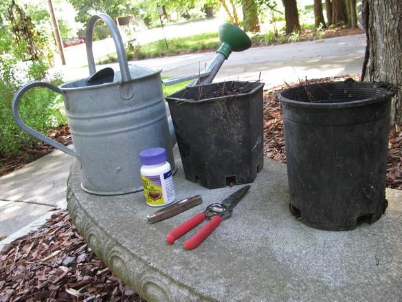 Layering Woody Plants (44)