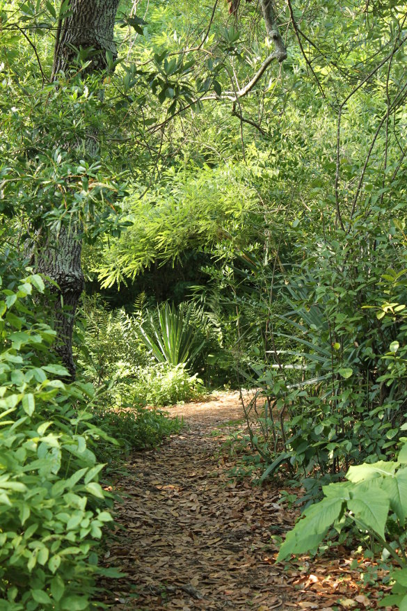 NC Botanical Garden 7_6_14 (121)