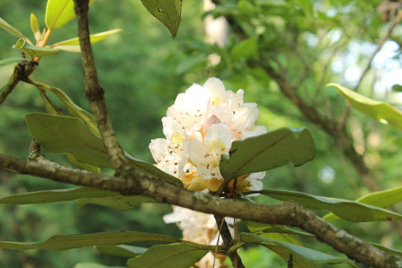 NC Botanical Garden 7_6_14 (122)