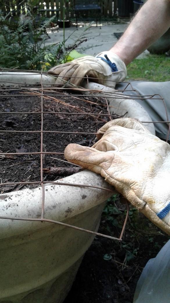 Planting Spring Tulips (14)