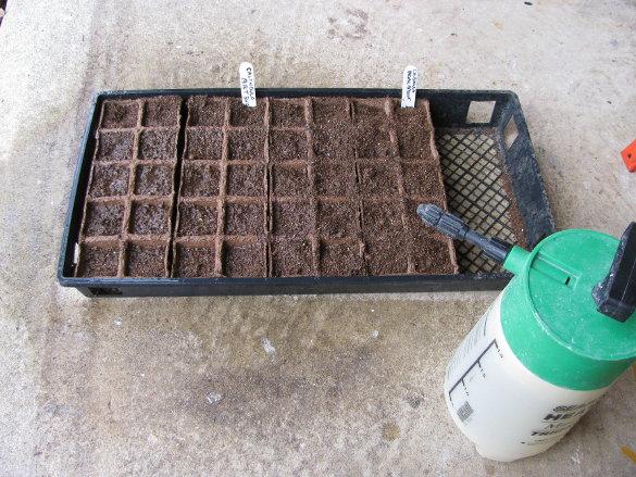 Starting Seeds (10)