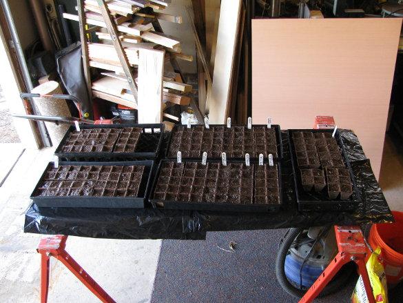 Starting Seeds (11)