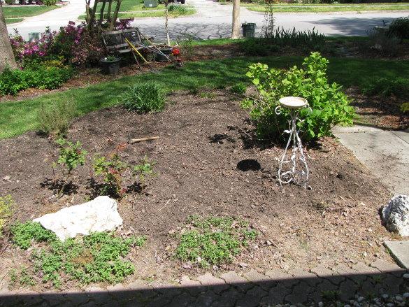 Starting Seeds (15)
