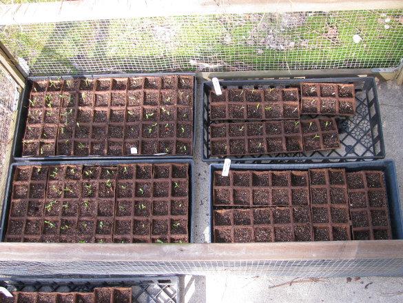 Starting Seeds (6)