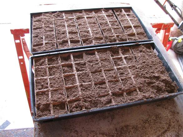Starting Seeds (7)