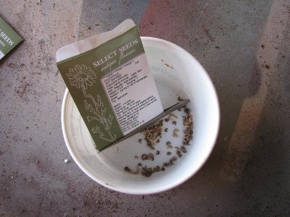 Starting Seeds (8)