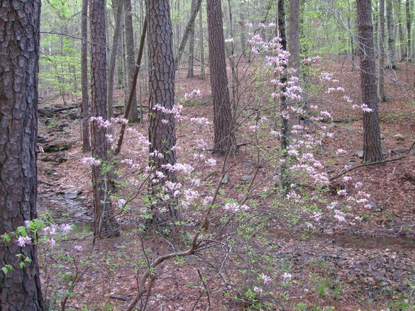 Umstead State Park (4)