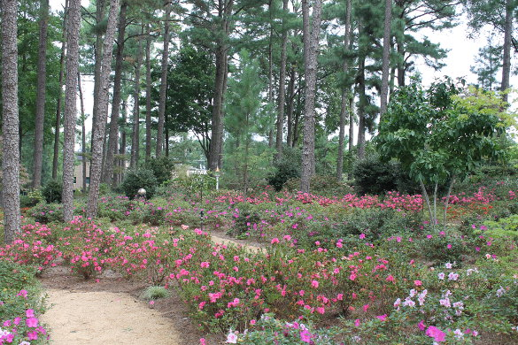 WRAL Gardens Oct 5 2016 (77)