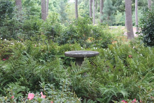 WRAL Gardens Oct 5 2016 (79)