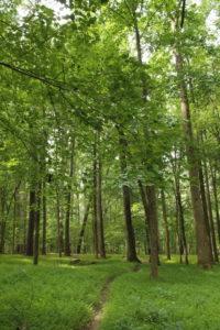 Wilkerson Nature Preserve 8_21_14 (59)