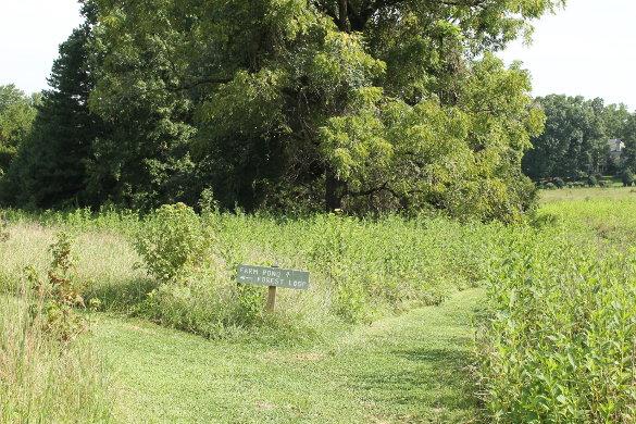Wilkerson Nature Preserve 8_21_14 (72)