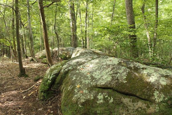 Wilkerson Nature Preserve 8_21_14 (75)