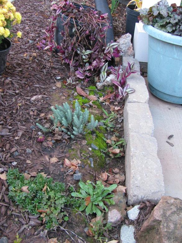 Yard Drainage 2 (21)