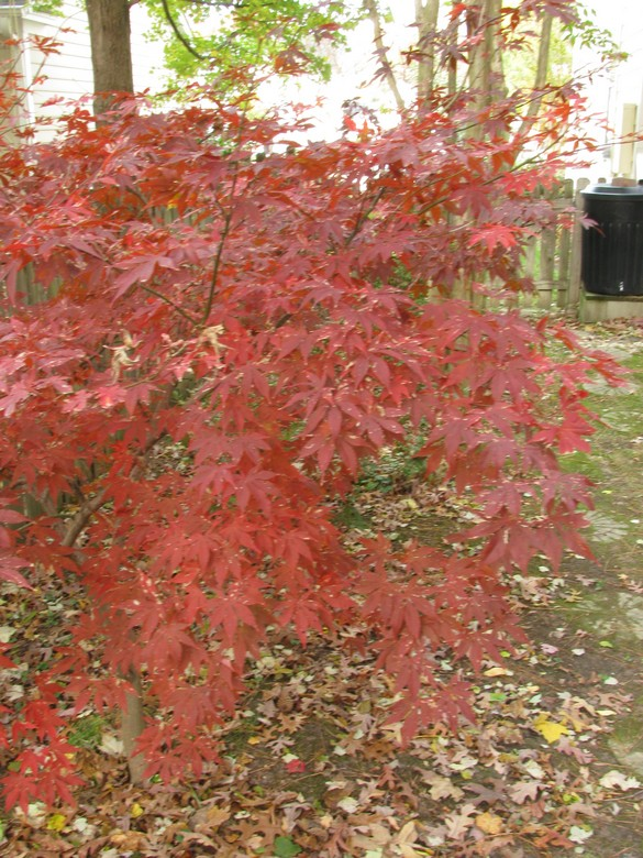 Fall Colors 11_21_17 (1)