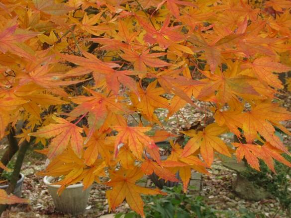 Fall Colors 11_21_17 (11)