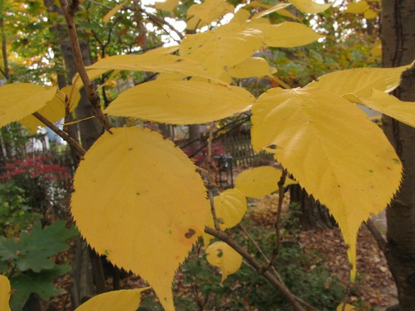 Fall Colors 11_21_17 (2)