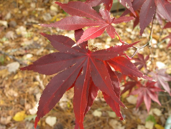 Fall Colors 11_21_17 (8)