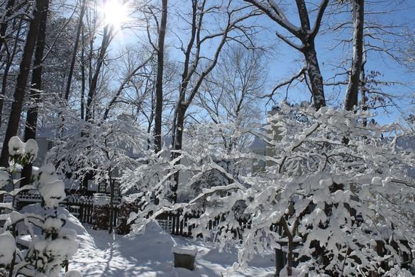 January 2018 Snow (3)