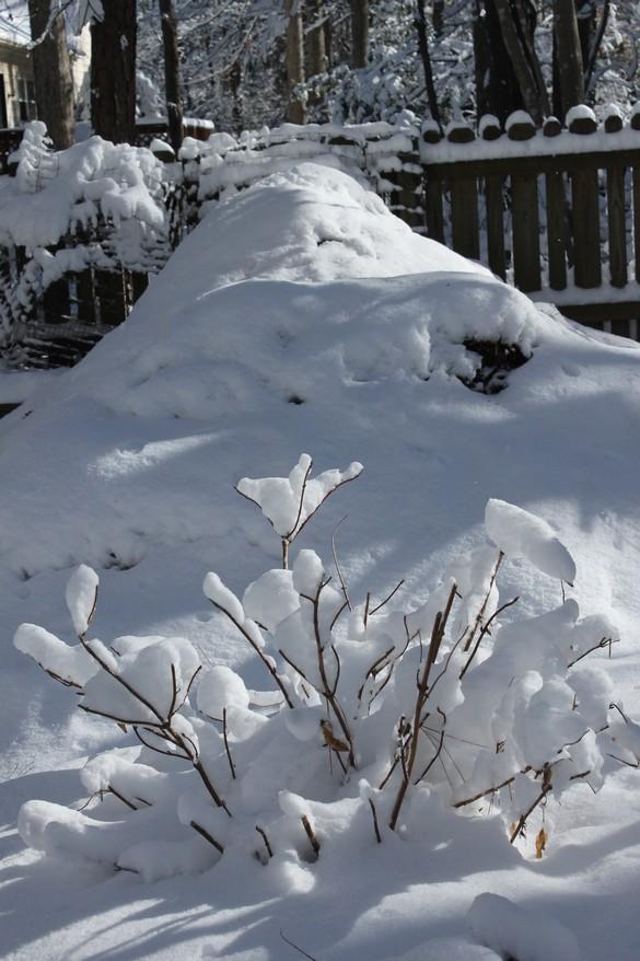 January 2018 Snow (9)