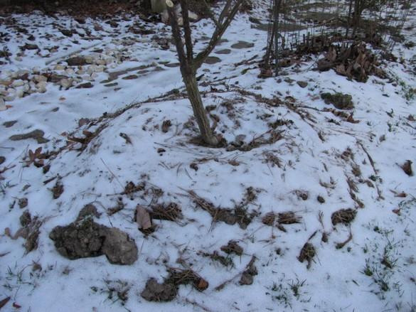 Winter Gardening 2018 (3)