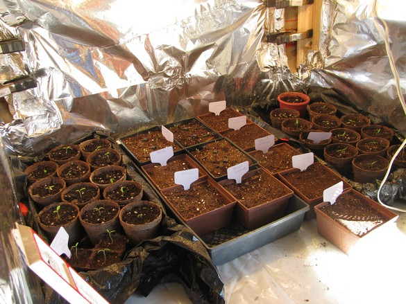 Seed Starting Station (9)