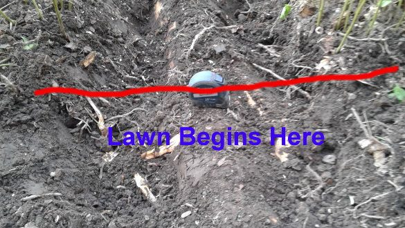 Lawn Root Issue
