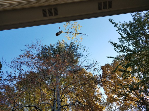 Removing the Oak Tree Nov 2018 (6)