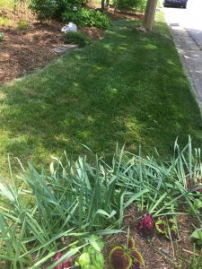 Lawn in Late May Afternoon (9)