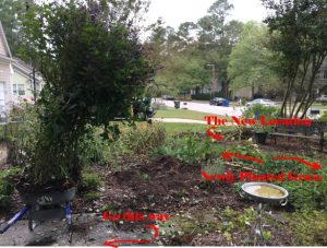 Moving Salvia